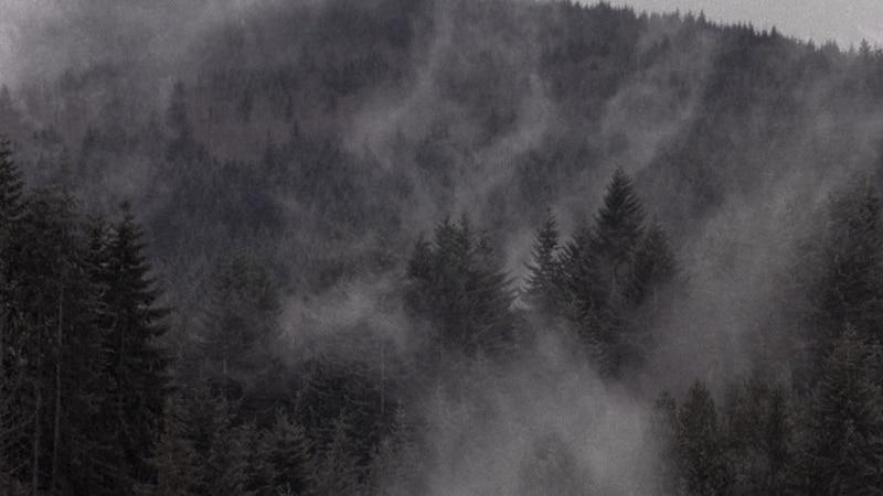 Twin Peaks, forêt mystérieuse